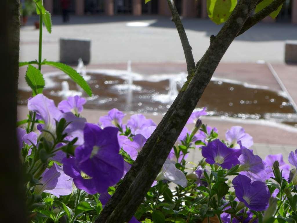 Bild von lila Blumen im Hintergrund Brunnen. Illustriert die 10 Tipps zur erfolgreichen Durchführung einer Blogparade.
