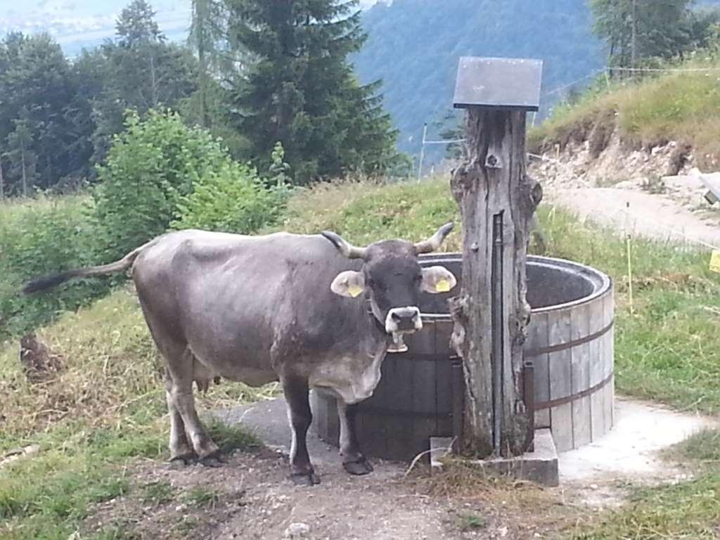 Mit stoischer Ruhe beobachteten uns die Kühe, während wir auf der Alm Social Media hexten.