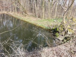 Biber Bassin im Schlosspark Nymphenburg
