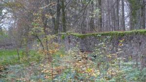 Trockenmauer im Wildpark Neuhaus
