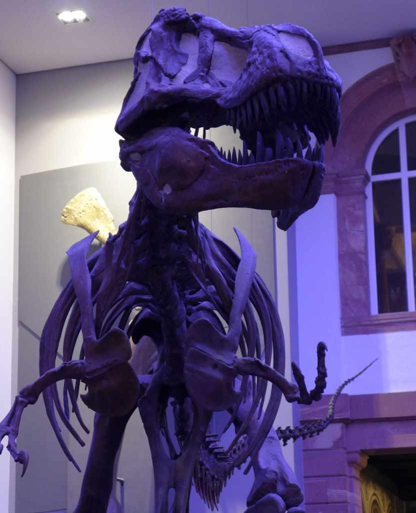 Dinosaurier; Dino; #MuseumBabel; Senckenbergmuseum; Frankfurt