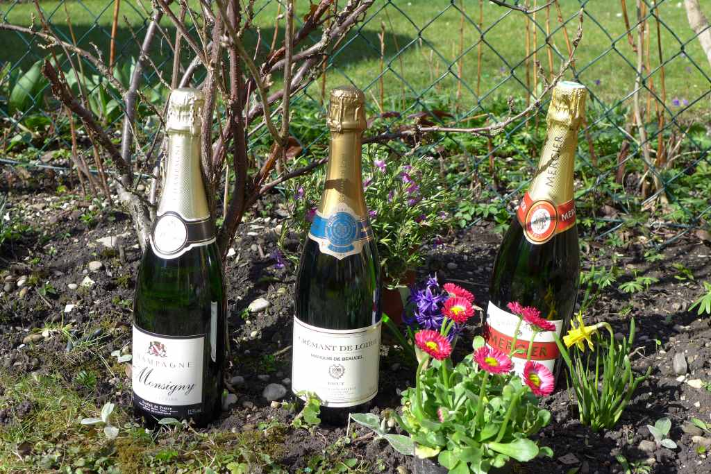 Nach der Disputatio knallen die Champagner-Korken: Lass es krachen!