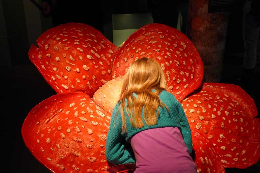 Lokschuppen Rosenheim; Regenwald Ausstellung; Regenwald; Duftblume