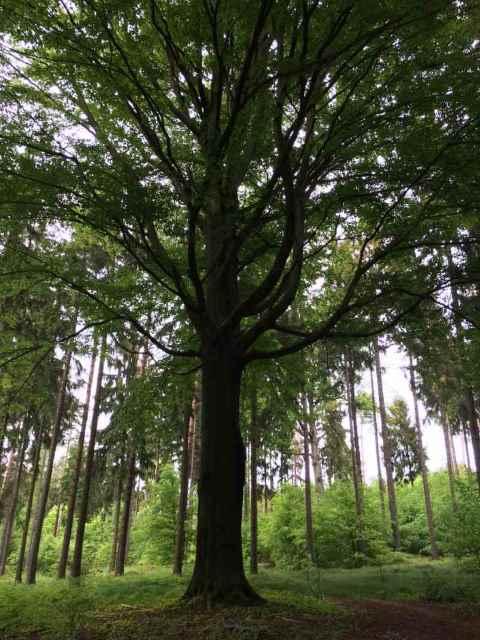 Ein markanter Lieblingsbaum... er hat viel zu erzählen... ich kenne die Geschichten seiner Inschriften nicht, aber zu jeder Jahreszeit beeindruckt er mich auf seine besondere Weise. Foto: Susanne Schneider.