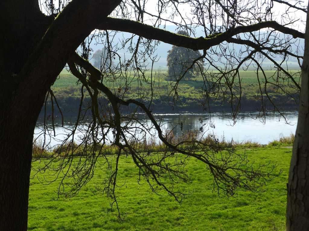 Blick auf die Weser mit Baum im Anschnitt