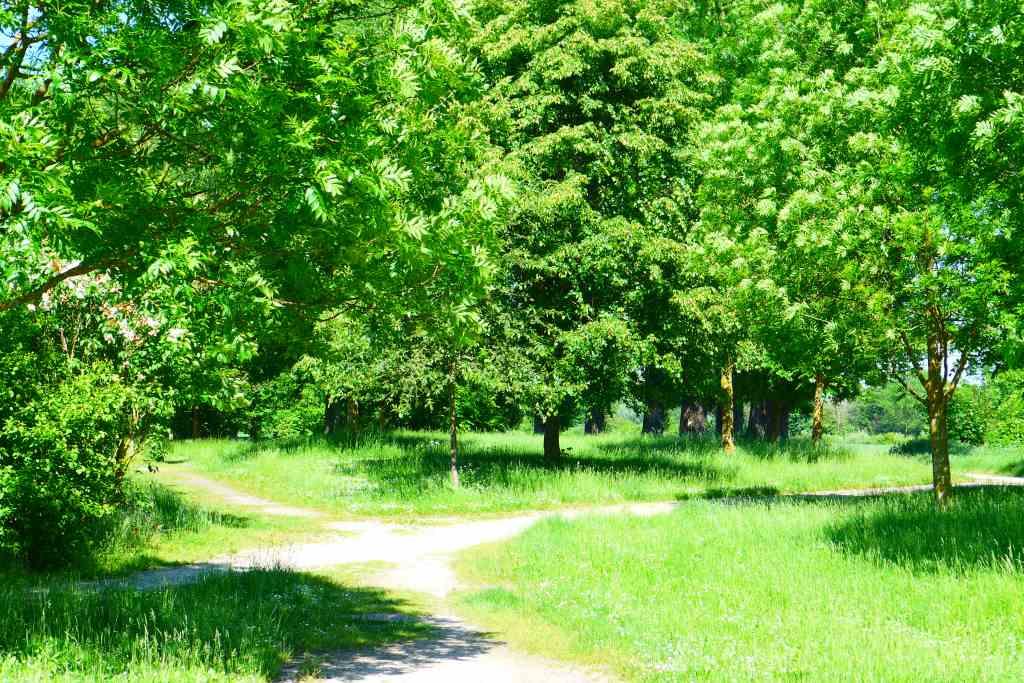Waldweg, grün, Bäume, verzweigt. Treffend zur Museumswelt in KW 23/2020.
