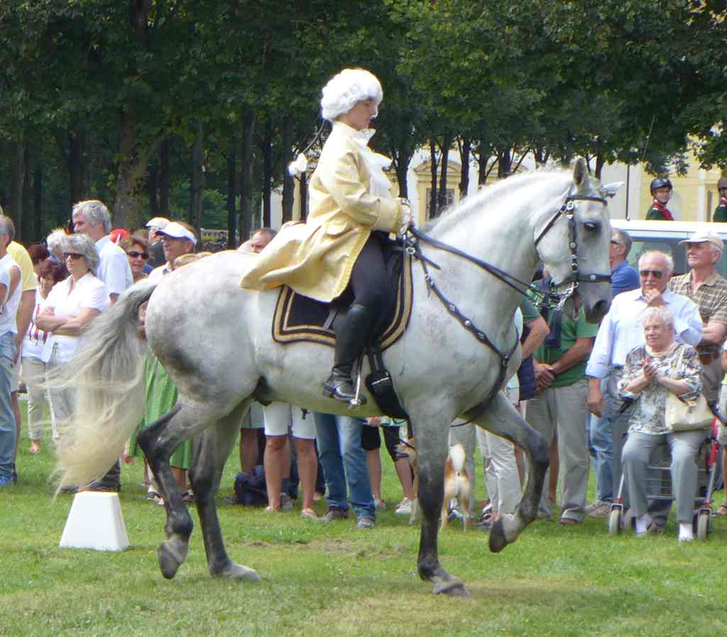 Kostümierter Reiter mit weißem Pferd zeigt Kunststücke.