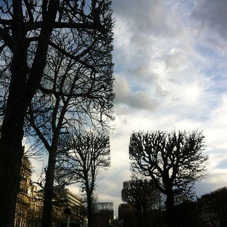 Blattlose, geometrisch geschnittene Bäume in einer Allee in Paris.