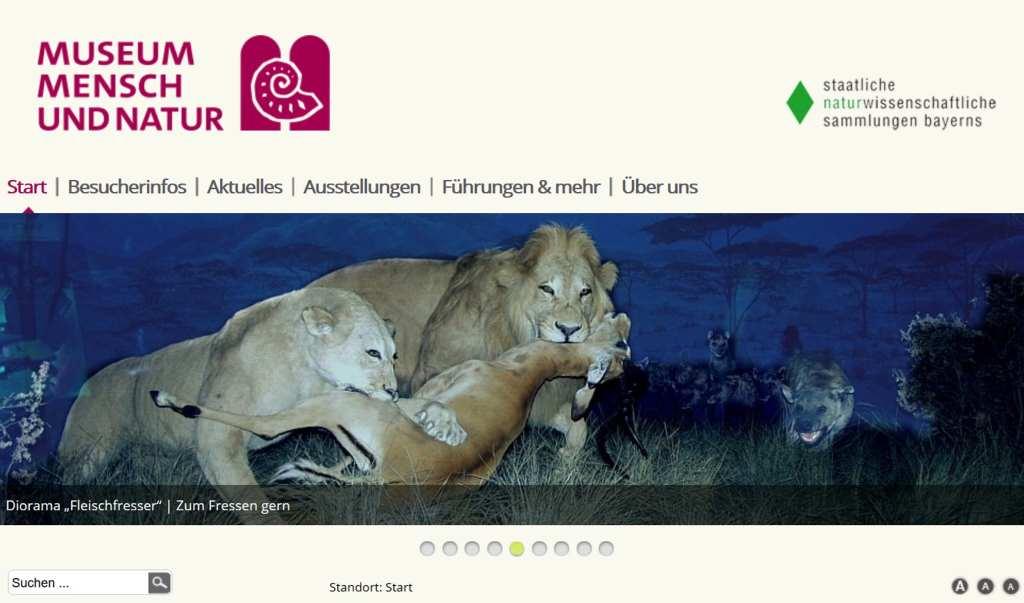 Screenshot der Website des Museum Mensch und Natur in München. Löwen reißen eine Antilope. #MusTipp