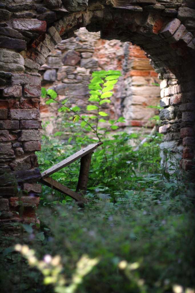 Ruine wird von der Natur zurückerobert. Bäume und Pflanzen wachsen hier überall. Montagsinterview mit Marlene Hofmann vom Museum Burg Posterstein.