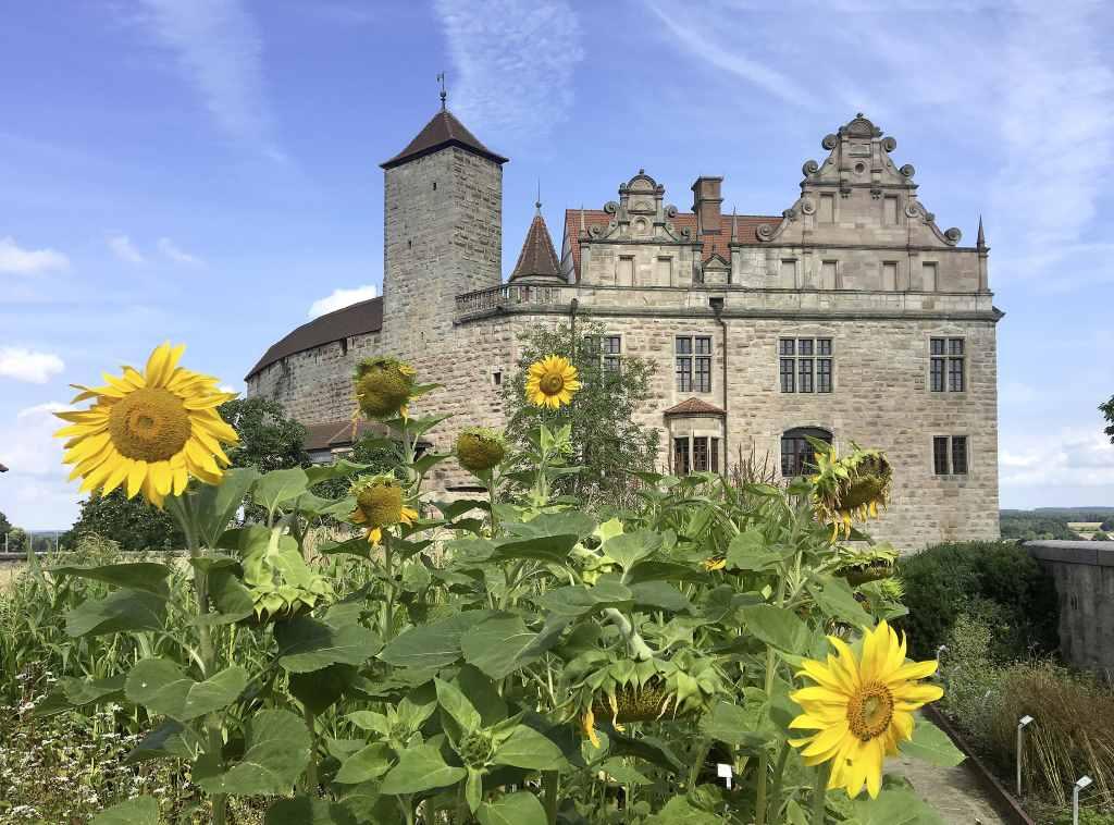 Die Cadolzburg vom Burggarten aus gesehen. Im Vordergrund Sonnenblumen, dahinter die Burg. Der #HohenzollernWalk zeigt unbekanntes Mittelalter. Foto: Bayerische Schlösserverwaltung.