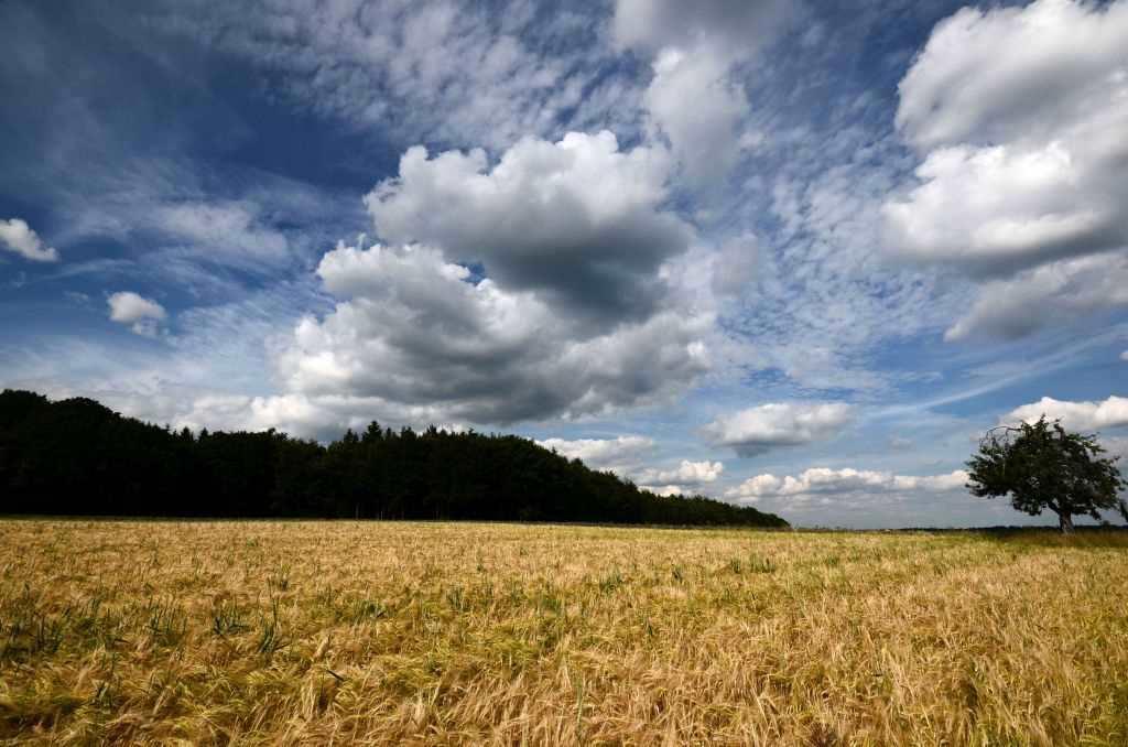 Braunes Gerstenfeld vor dramatischer Himmelskulisse, blau und wolkenverhangen. Beeindruckende Bilder aus dem Odenwald gibt es im Landlebenblog ganz viele!