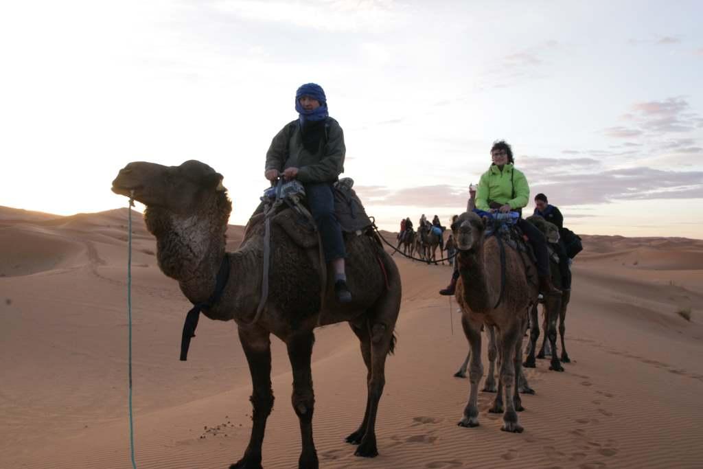 Kamele mit Reiterinnen. sylvia Hubele