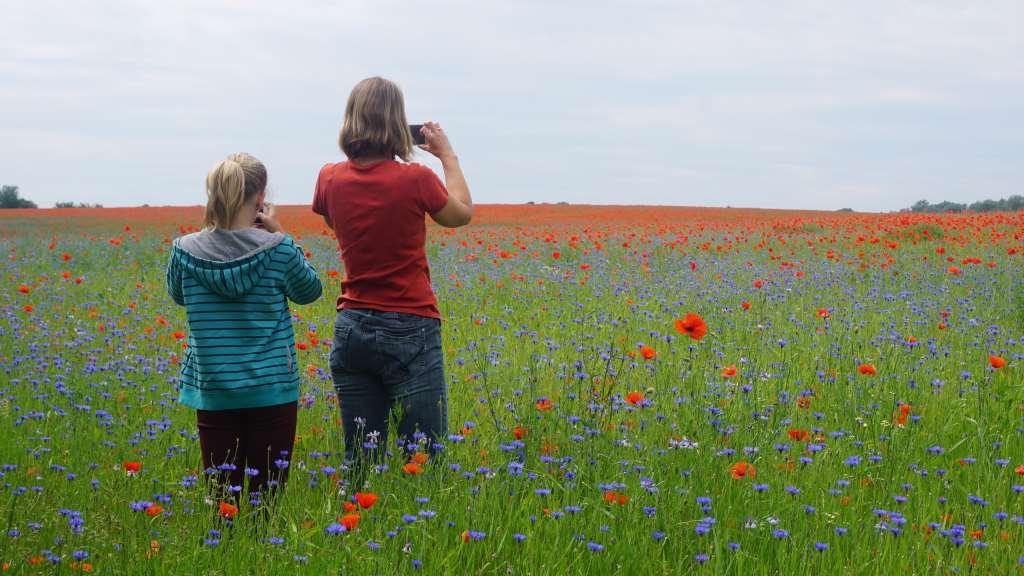 """2 Mädchen stehen mit dem Rücken zum Betrachter im Mohnfeld. Beide fotografieren die Blumenwiese, eben """"Internet und echtes Leben"""". Foto: Christian Buggisch."""
