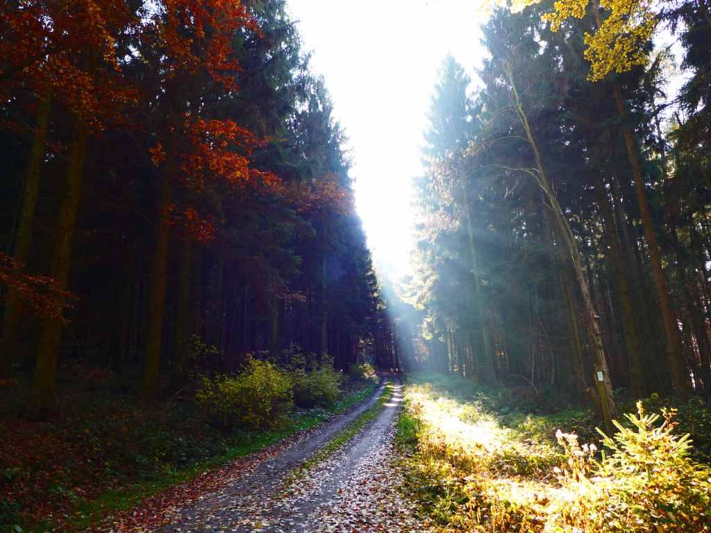 Blick in den Wald im Herbst. Sonnenlicht, soll die Buntheit von Blogparaden im Herbst illustrieren.
