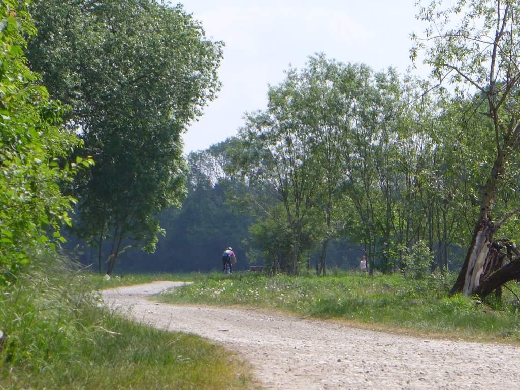 Fahrradweg mit Radler und Jogger blick in Richtung Wald. 12von12