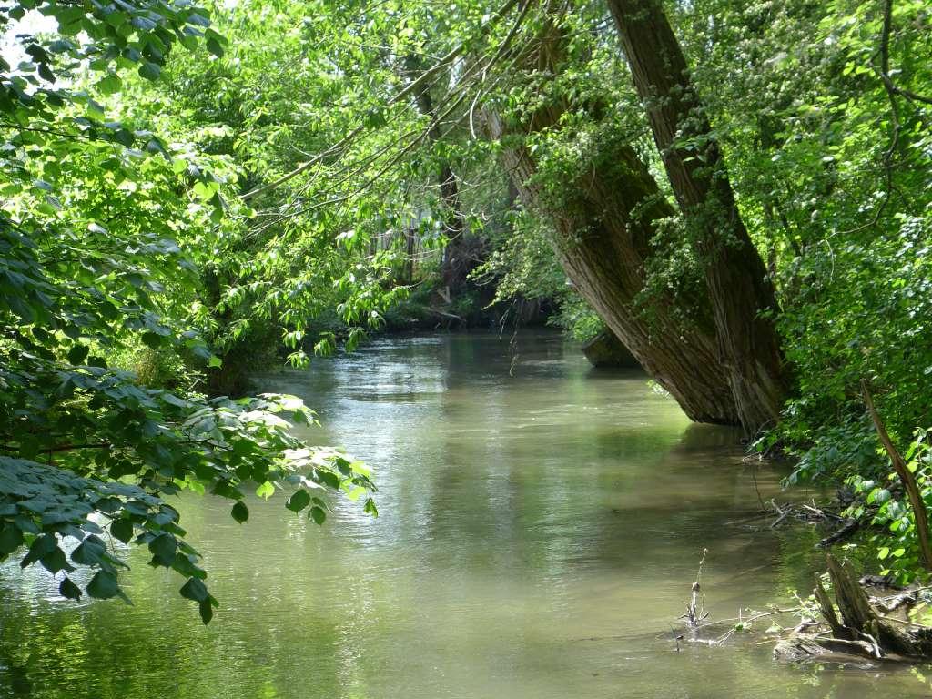 Bachverlauf mit Bäumen. 12von12