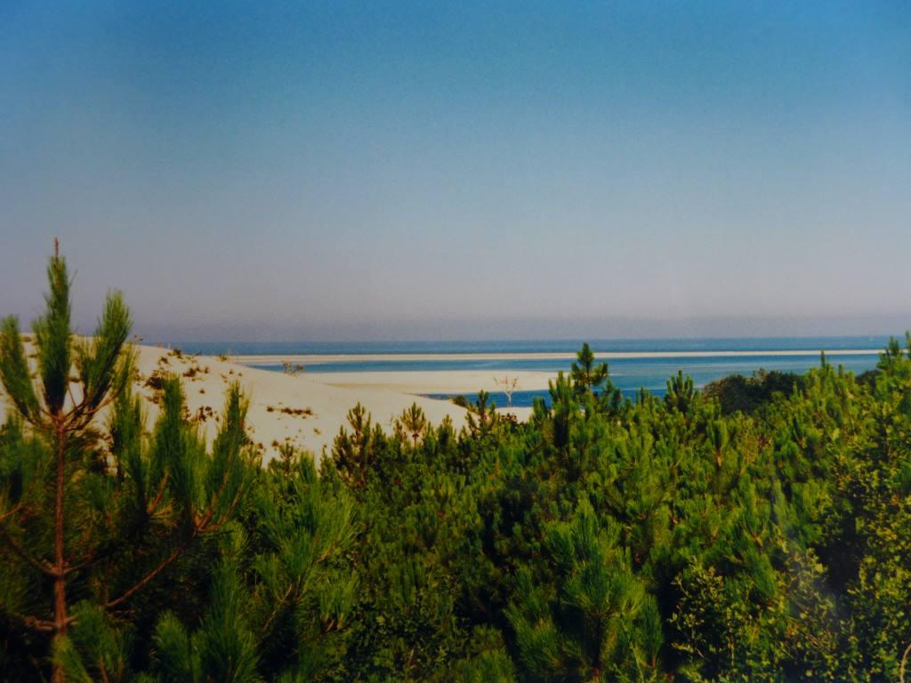 Blick über Pinien hinweg auf den Atlantik in Südfrankreich für die Blogparade #DHMMeer im Fotoarchiv gesucht