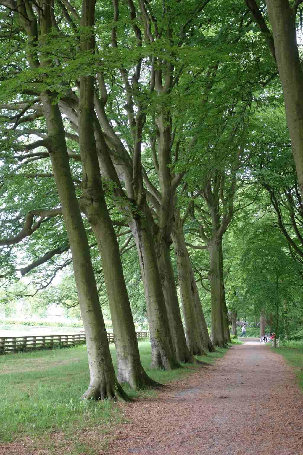 Ockenburgh, Park