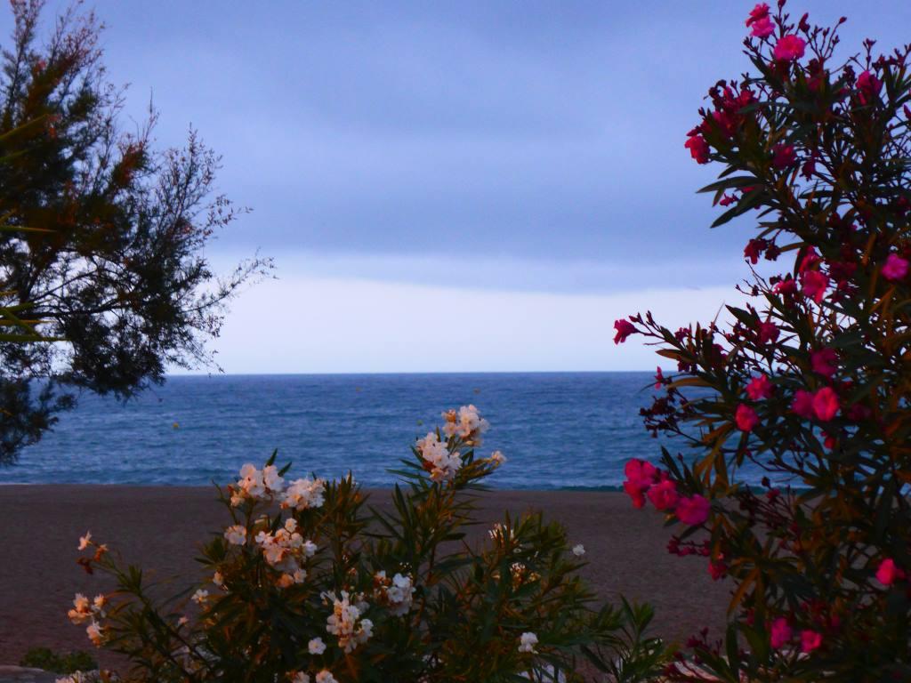 Blick bei Dämmerlicht auf den Atlantik. Blumen im Vordergrund. Blogparade #DHMMeer