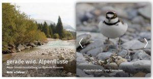 """Ausstellungen in München: """"gerade wild. Alpenflüsse"""" - Alpines Museum. Screenshot Website."""