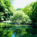 Die Museumswelt in KW 24 von 2020 ist so vielfältig wie die Natur mit Teich im Weserbergland. Museumsblogs inspirieren.